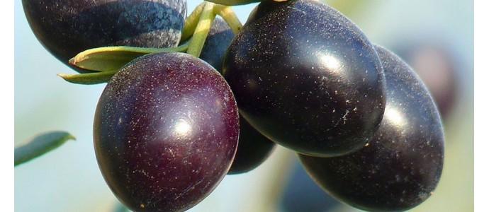 Olio Evo Extravergine, salute e benessere